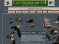 http://www.oiseaux-en-vol.com