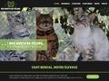 Chat et chaton bengal des nuits de félins.