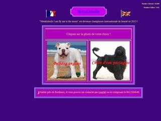 Métaki's bulls élevage de bulldogs anglais inscrit au LOF