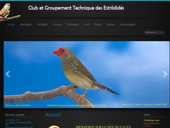 Club and technical group of estrildids