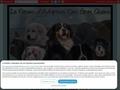 Adoption gros chiens
