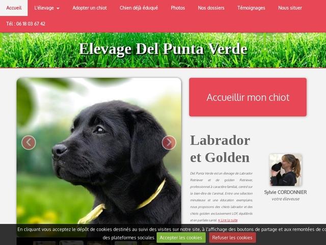 Élevage de Golden et Labrador Del Punta Verde