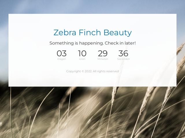 Zebra Finch Beauty's
