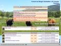 Forum sur le Berger Australien