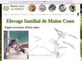 Chatterie du mango : Maine Coon
