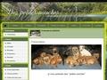 """Border Terrier """"Des Petites Nouches"""""""