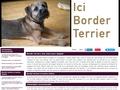 "Ici Border Terrier ""Newzanthynes"""
