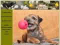 """Border Terrier """"Du Bois Caman"""""""