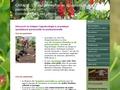 Conseil et formation en agroécologie et permaculture