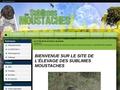 Des Sublimes Moustaches - Griffon d'arrêt à poil dur Korthals (34)