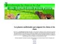 Phytothérapie pour chien et chat