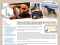 Educateur canin & Comportementaliste chien et chat