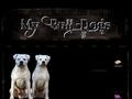 My Bull-Dog's
