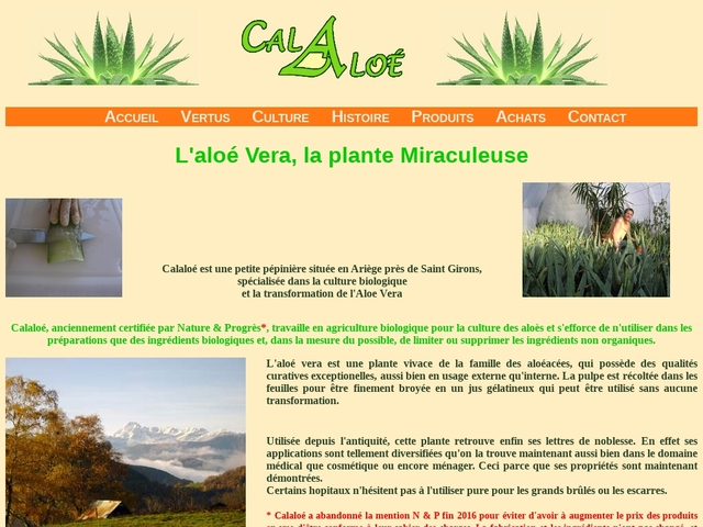 L'aloé vera, la plante miraculeuse