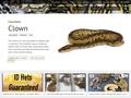 Genetik of Ball pythons