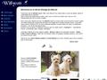 Elevage West highland white terrier, Willycott