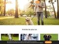 DogCity - Le site communautaire pour les chiens