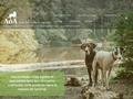 AoA - Education canine - Accueil