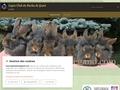 Lapin Club du Barbu de Gand