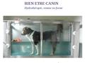 Bien-être canin  Hydrothérapie, Remise en forme
