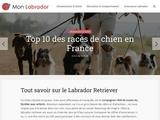 Mon Labrador
