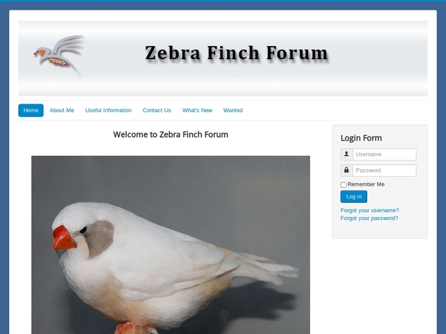 Zebra finch Forum