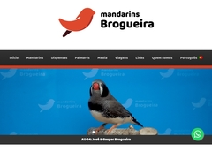 Zebrafinch Brogueira