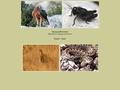 Oiseauxprovence, le site du naturaliste en Provence.