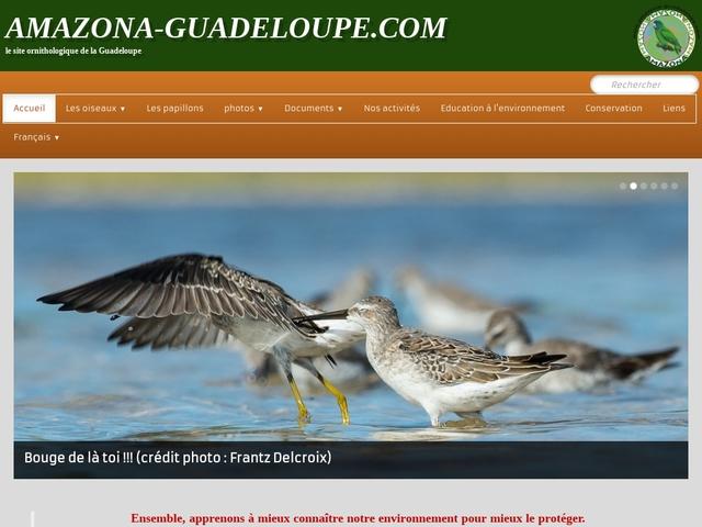 amazona-guadeloupe