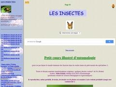 Le Monde des insectes d'Alain RAMEL