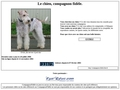 Le chien: morphologie